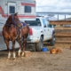 Liability Insurance Odessa, TX